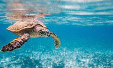 Yucatan Tours - Tulum, QR > Riviera Maya > Cancun, QR