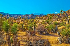 Western Tours - Palm Springs, CA > Joshua Tree > Route 66 > Kingman, AZ