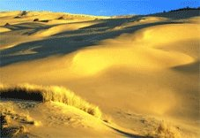 Pacific Coast Tours - Florence, OR > Oregon Dunes Nat'l > Brookings, OR