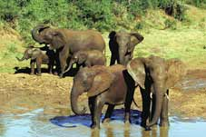 Route 62 Tours - Graaff Reinet > Safari 4x4 Addo Elephant > Port Elizabeth