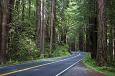 Pacific Coast Tours - Brookings, OR > Redwood Nat'l Park > Fort Bragg, CA