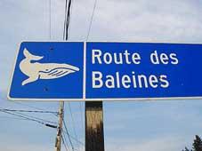 Grandeur Nature Bike Tour - Tadoussac, QC > Route des Baleines> Baie Comeau, QC