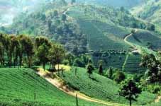Thaïlande Bike Tour - Chiang Rai > Parc Natiional Doi Phu Nang > Uttaradit